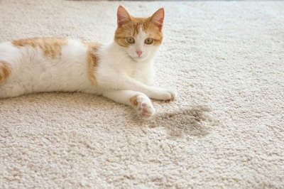 Очистка коврика от аромата домашнего питомца