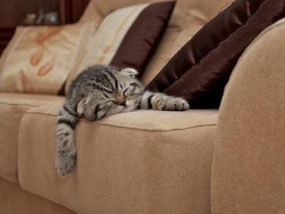 Удаление с мебели запаха животных